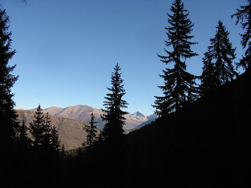 1156087043_Roubion-foret-1